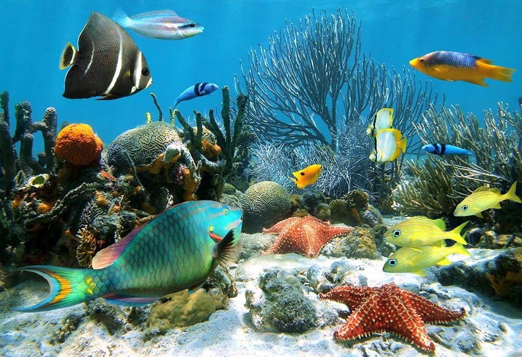 animal underwater @paperslife
